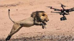 男子用无人机近距离拍摄野生动物,不料被一巴