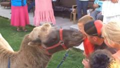 孩子的快乐都很简单,还在和动物的搞笑事儿~