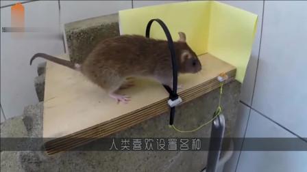 老鼠偷偷躲在轮胎上,想恶搞猫咪一番,接下来