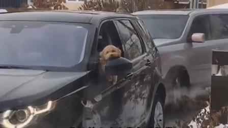 搞笑视频:我不想坐在汽车里哭 我就想坐在自行