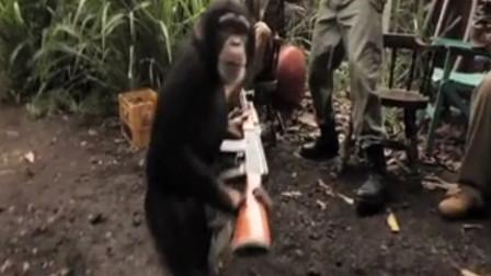 搞笑视频:当猩猩真的拿枪的时候会怎么样?