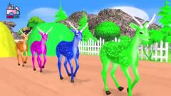 儿童3D动画颜色启蒙!一起来为小动物们染上喜欢