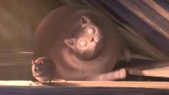 搞笑短片:当动物都胖成了球,猫圆得就像保龄