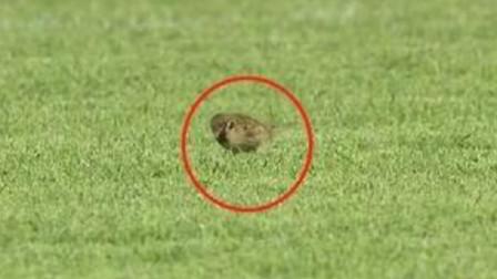 中国足球遭讽刺!国奥球员攻不过半场,对方禁区6只麻雀悠闲觅食
