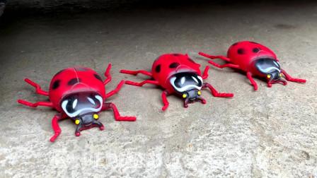 牛人把玩具蜘蛛放到车轮下,好过瘾呀,真的好减压