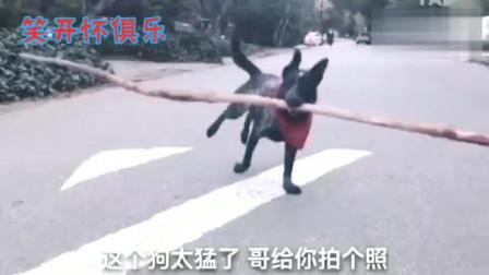 搞笑视频:外国人的搞怪动作失误集锦,看的时