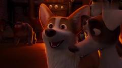 短腿小柯基:狗子跳钢管舞,真是太惊艳了,小