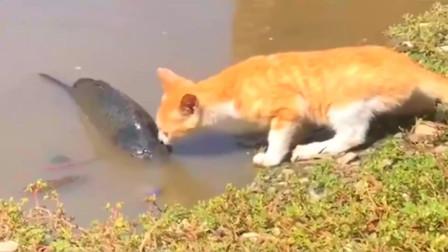 搞笑视频:这才是真的心有鱼而力不足!