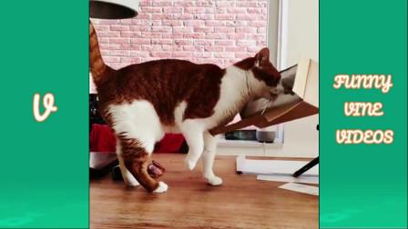 2019年度最佳搞笑视频盘点 -7 - 有趣的猫