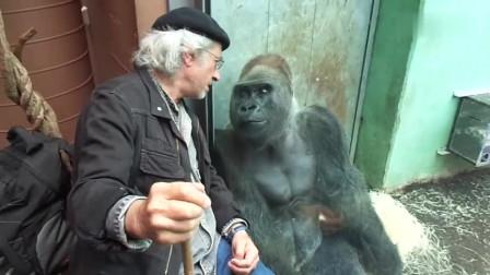 老头和大猩猩嘀咕着什么,没想到下一秒围观美