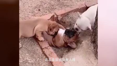 搞笑视频:狗蛋子,这是我的坑,真是屎坑没有人蹲,蹲开有人争