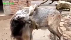 那些成精的动物们,每一个都是搞笑的源泉