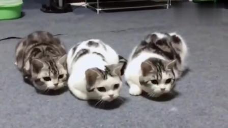 当猫咪遇上电脑开机音乐,太整齐了,没有一个拖后腿的