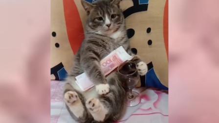 搞笑视频:二猫你看,你钱有了,酒也有了,你
