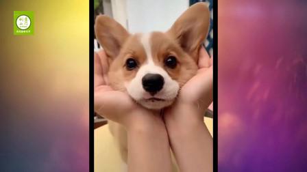 2020最佳搞笑动物视频合集-萌宠们的糗事