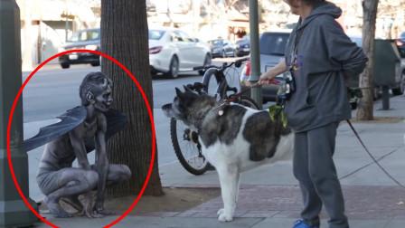 """小伙扮成""""恶魔""""恶搞路人,结果来了条恶犬,"""