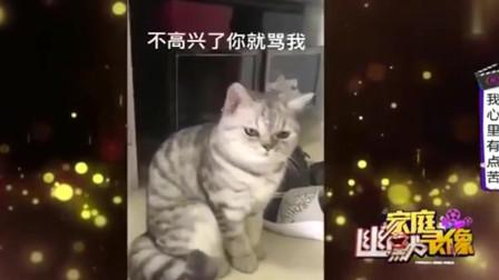 家庭幽默录像:养猫也不是一件省心事,主人如
