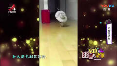 家庭幽默录像:不一样的猫步,橘猫居然走出来