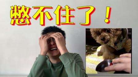 挑战动物界搞笑视频!只是看了第一个,我就直