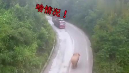 搞笑视频:对面靠山太强大,咱惹不起,还是赶