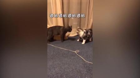 搞笑视频:动物要说话是一种什么体验