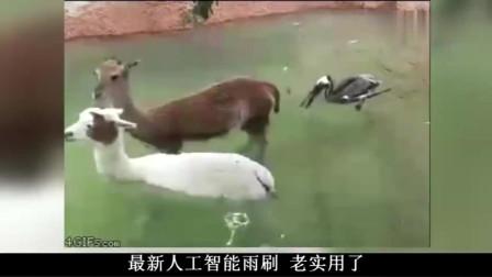 搞笑视频:猴哥怒打剧务,笑死我了,哈哈哈哈