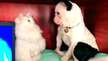 可爱的猫猫狗狗等宠物的搞笑视频集锦