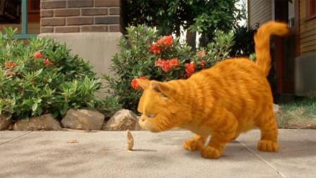 猫界最失败的猫咪,不吃老鼠还要老鼠保护自己