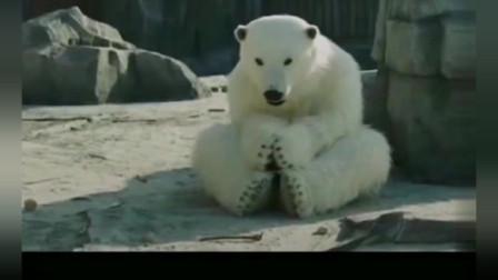 搞笑动物园,树懒会玩手机,狮子会跳舞,北极
