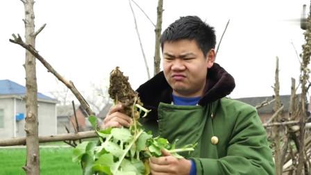 搞笑视频:二货好赌被丈母娘训斥,怎料拔萝卜