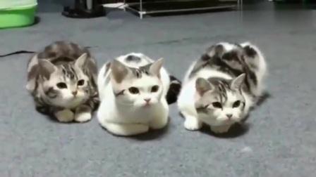 萌宠:当猫咪遇上电脑开机音乐,太整齐了,没有一个拖后腿的