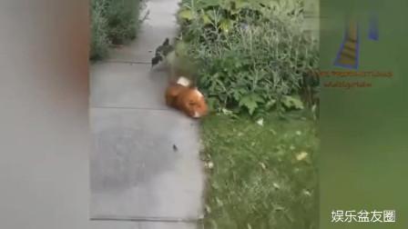 搞笑动物集锦, 一起来看看吧