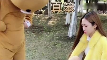 网红熊给美女擦鞋,没想到竟然被熏晕了,太搞笑啦!