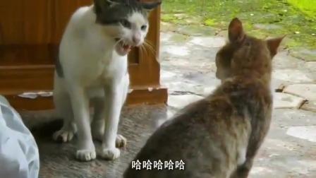 搞笑视频:(世界上)只剩下我们两只猫了哦