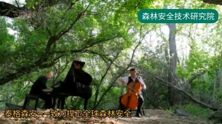 《森林音乐——西方》 了解森林,爱上森林,保