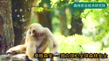 《森林音乐——东方》 了解森林,爱上森林,保