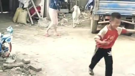 山羊和美女,是有什么深仇大恨吗,一见面就打架!