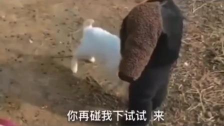 搞笑视频: 小花你知道吗 这里的羊都是我手下