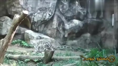 笑到肚子痛,搞笑动物视频