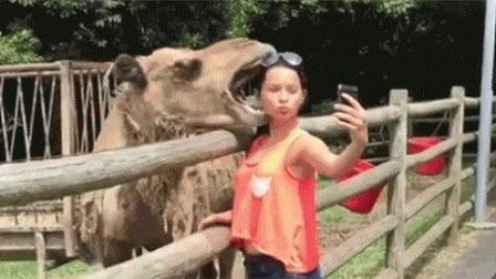 搞笑视频:和动物合影的错误方式