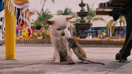 小老鼠在街边装可怜,成功骗到一只富婆小狗狗