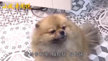小凤奇闻说:单身年轻女性为何爱养狗?答案让人意外