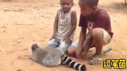 搞笑视频:猴子打野被捉了?