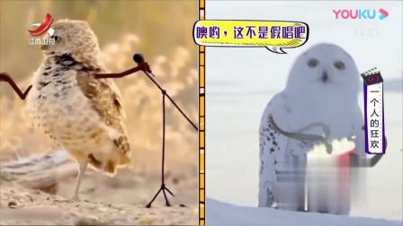 家庭幽默录像:当给猫头鹰加上了特效,你会发现每个猫头鹰都是不可多得的戏精啊!