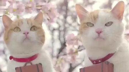 日本某旅行杂志创意广告:猫猫狗狗萌翻天!