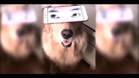 宠物成精了,超搞笑动物视频合集