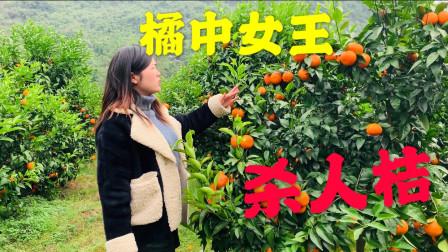 农村美女种植200亩沃柑,上百亩的果没人要,她