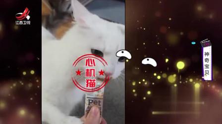 家庭幽默录像:猫星人可真是个小神经!一犯狠