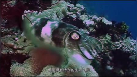 外国美女捕到金枪鱼,做中式蒸饺好吃到流口水