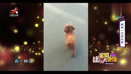 家庭幽默录像:有一种狗狗平时软萌乖巧,但音